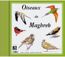 BIRDS OF NORTH-WEST AFRICA